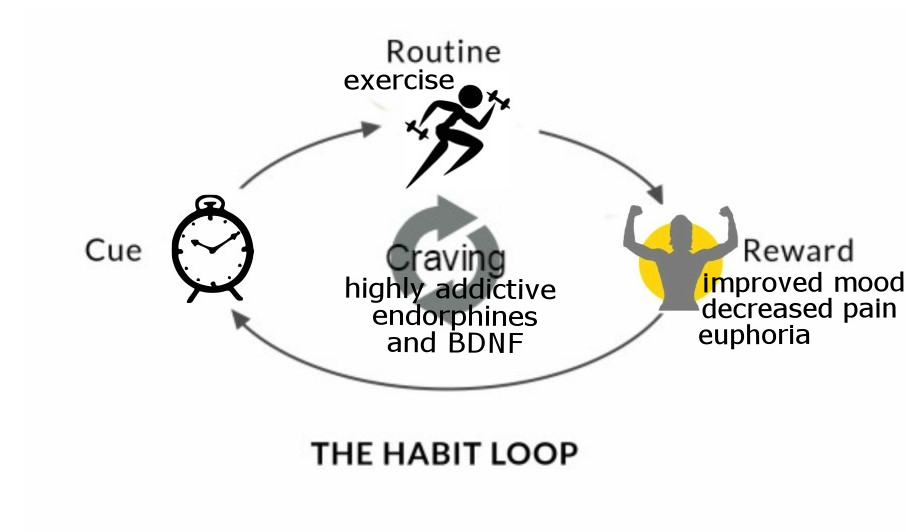 exercise reward and craving habit loop