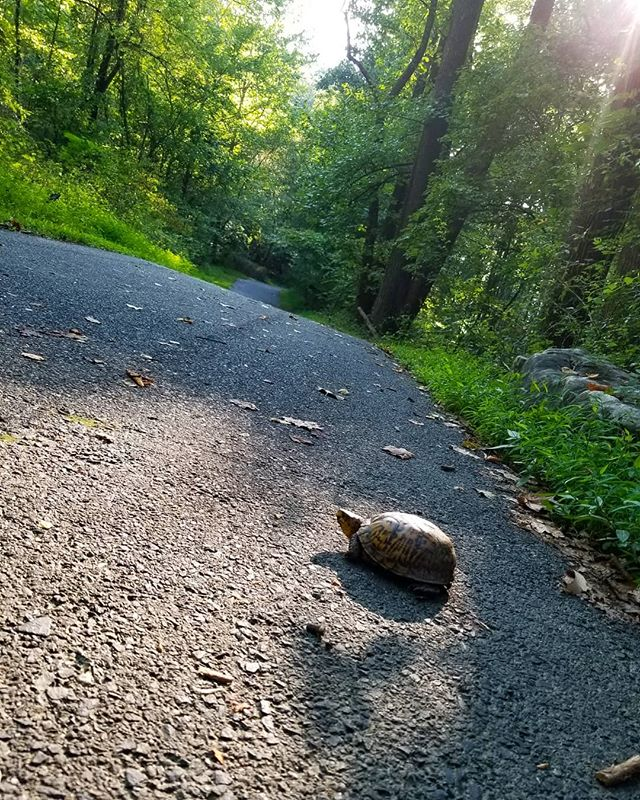 #seenonmyrun 🐢 Beautiful weather means a beautiful run. It's true that you are always one run away from a great mood. #mentalhealth #endorphins #ellicottcity #fightdepression #fightforit #youreworthit #nature #determination #enjoythejourney #runner #selfimprovement #loveyourbody #loveyourself #strength #ichoosebeauty #gratitude #getoutside #strengththroughstruggle #staystrong #empoweredwomen #strongereveryday #getoutdoors