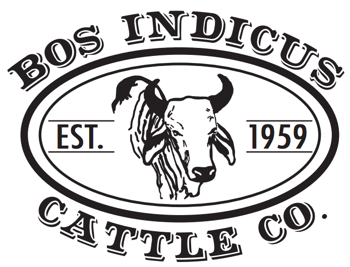 Bos Indicus Cattle Co