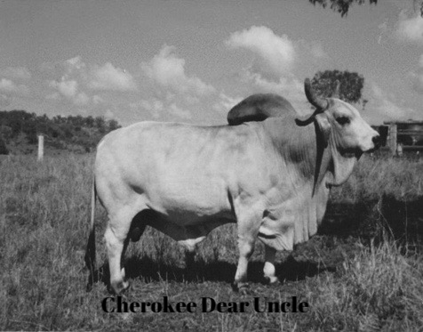 Cherokee Dear Uncle