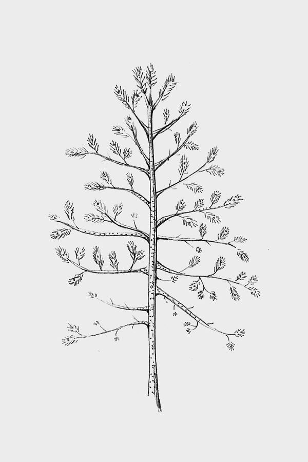 Träd1BW.jpg