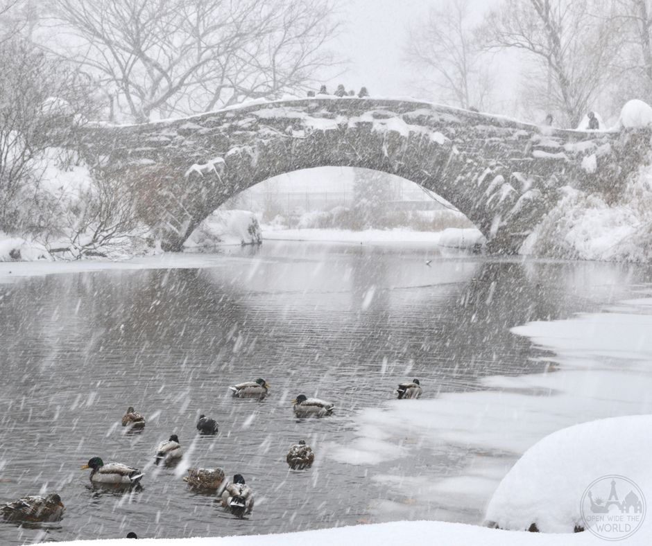 Nothing but a paddle of ducks, the two of us, and a handful of hearty hikers in Central Park during Winter Storm Jonas