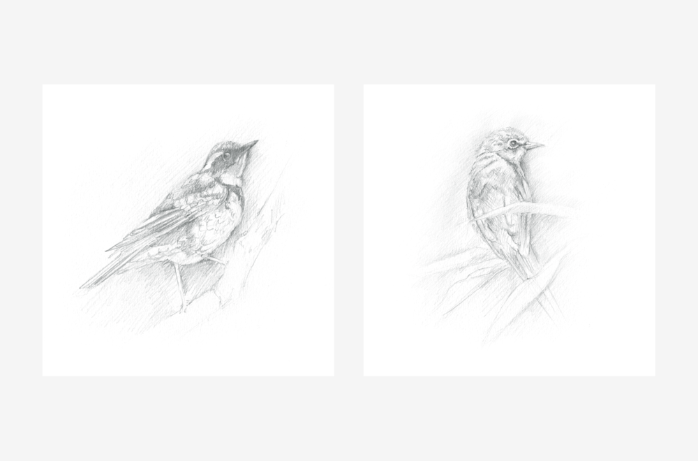 birds-bw-gallery.png