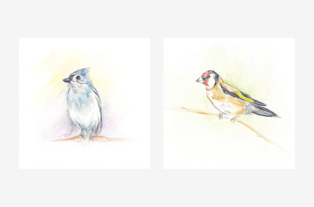 birds-color-gallery.png