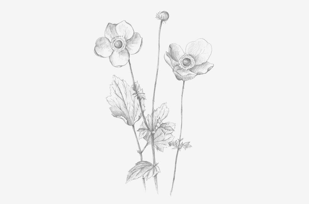 flower-pencil-gallery.png