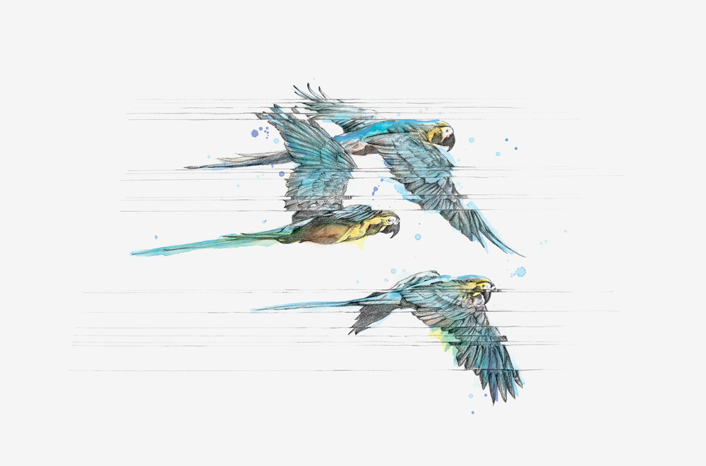 parrots-gallery.png