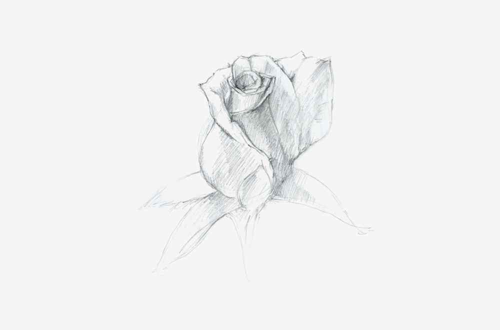 rose-2-gallery.png