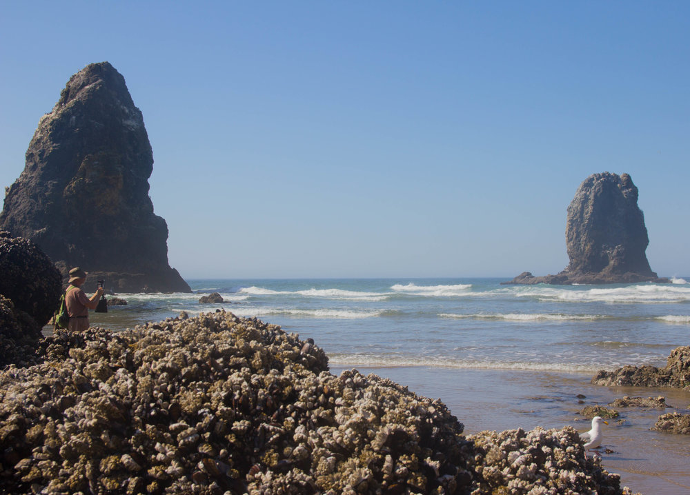 is cannon beach worth the drive, haystack rock, needles in the haystack, oregon, pdx. what to do in cannon beach, oregon coast, pacific northwest