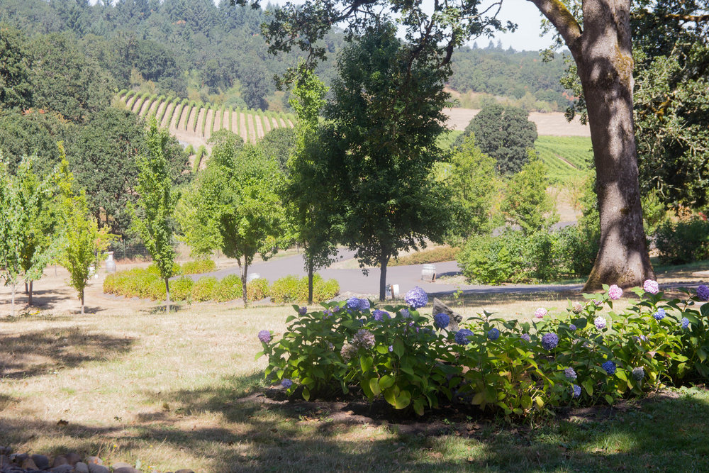 pinot noir, where to wine taste in the willamette valley, oregon, wine tasting, left coast cellars