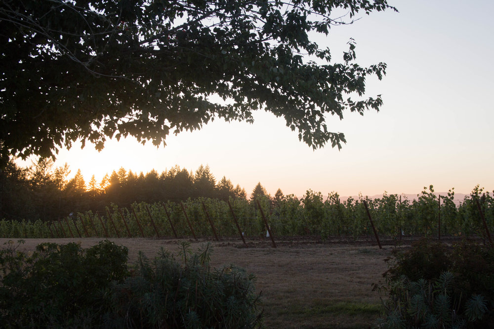 travel guide what to do in the willamette valley, salem, oregon, atthejoy, anahata vineyard