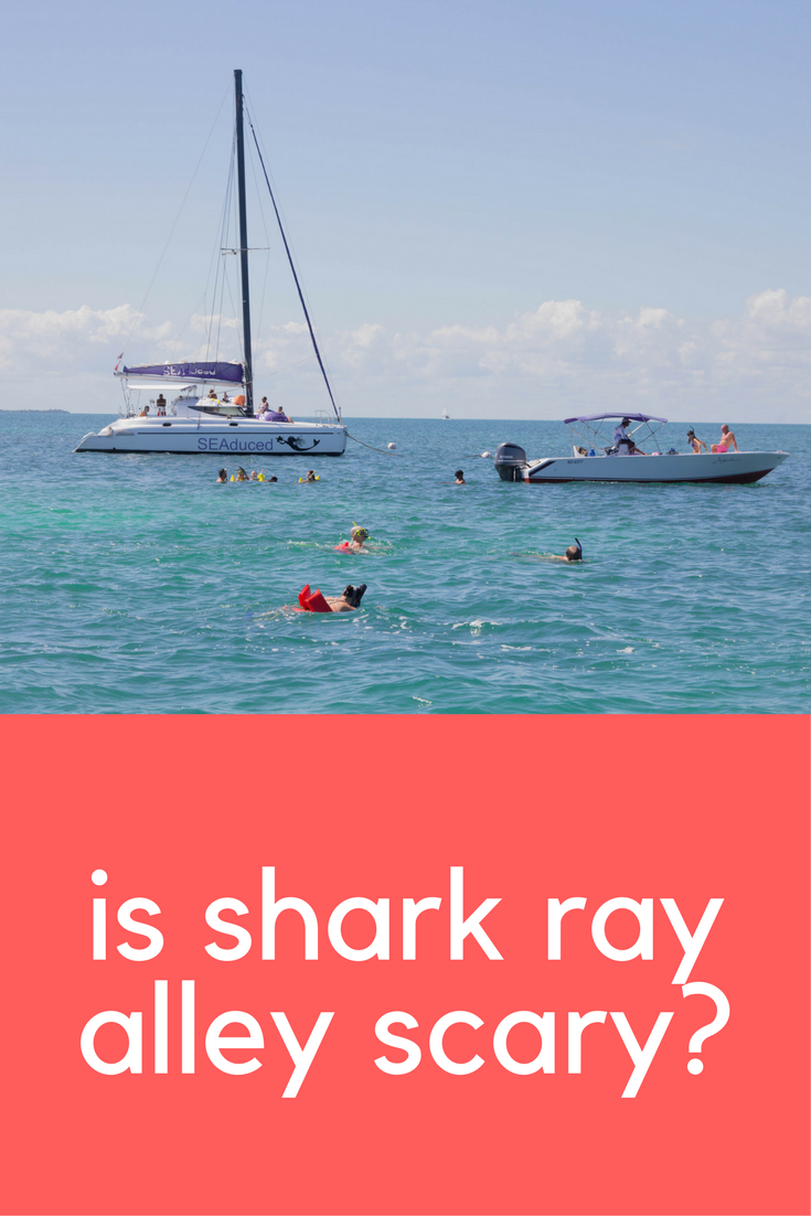 is shark ray alley scary, belize, ambergris caye, san pedro, things to do in belize, snorkeling in belize