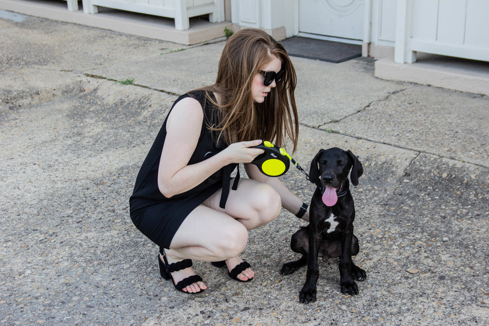 Great dane puppy, english factory front lace up dress, rebecca minkoff candace block heel sandals, american eagle purrrty sunglasses, r and d great danes, male great dane, puppy story, we got a puppy, lments of style, ellespann