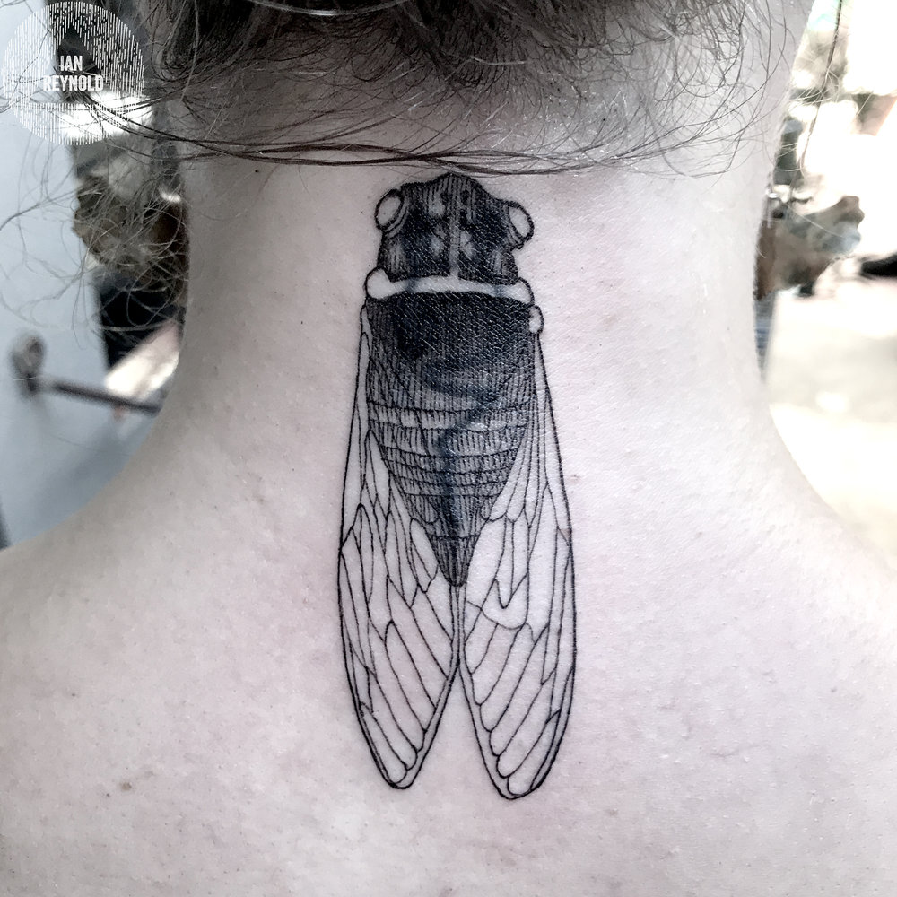 Blackened Cicada