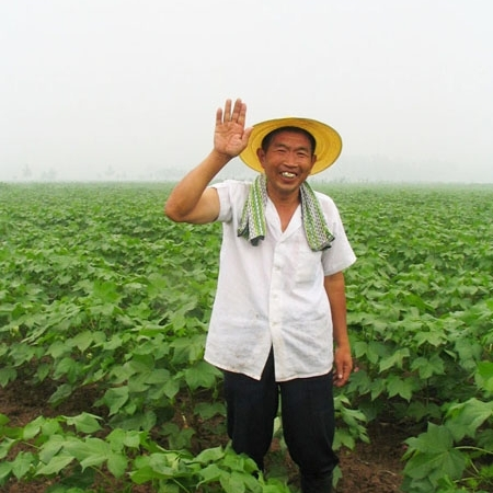Non-pesticide cotton farm