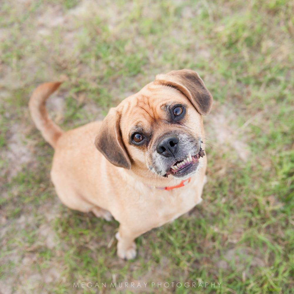 underbite dog smile in houston park