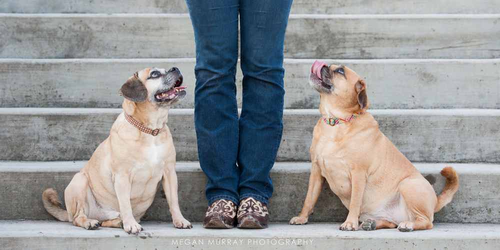 puggle dogs and texas cowboy boots