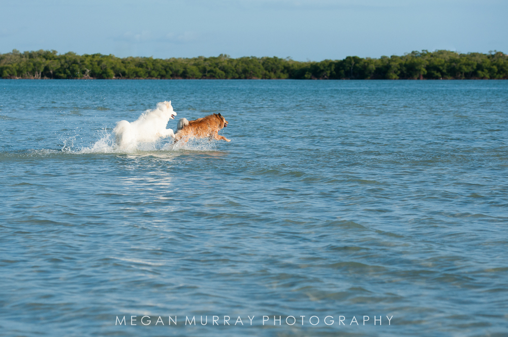 two dogs splashing in the water at the beach