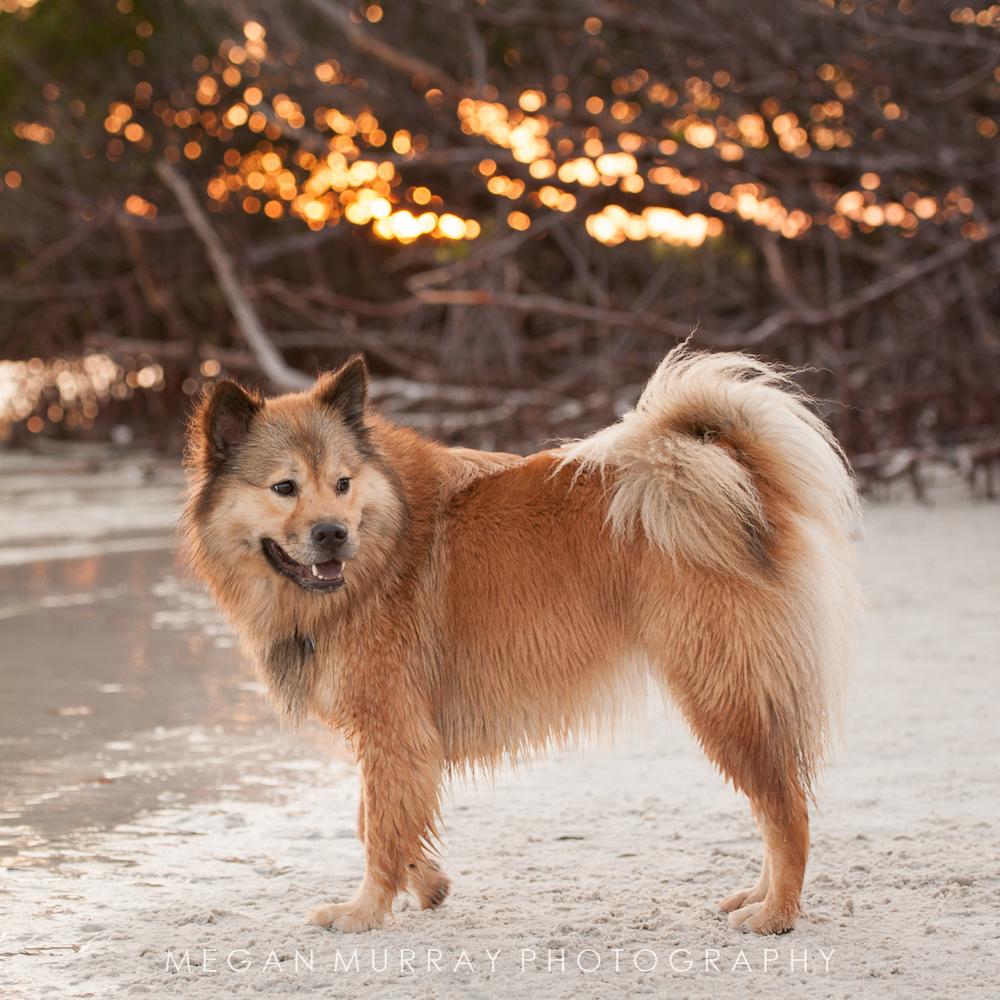 dog on sandy florida beach