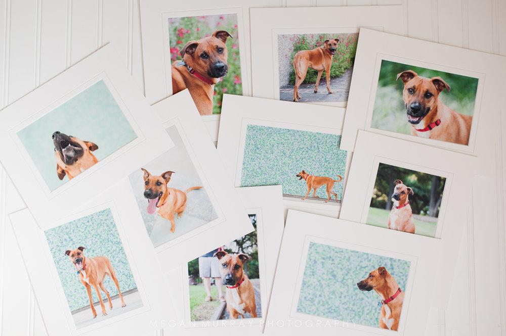 houston fine art pet photographer matted prints
