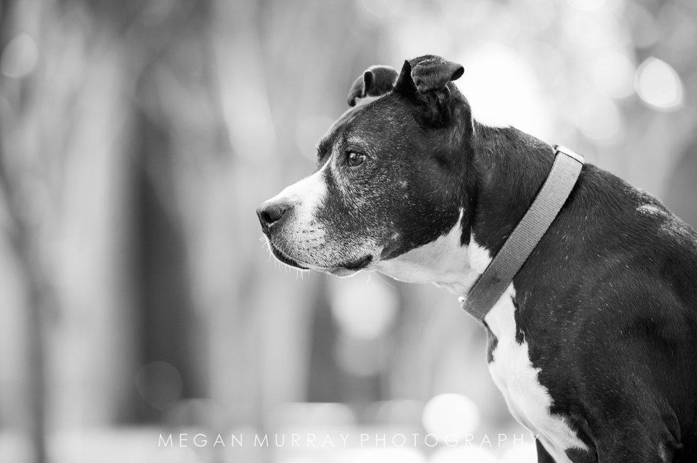 houston rescue dog