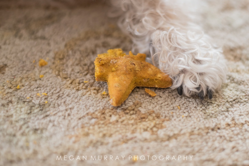 dog eating homemade dog treat