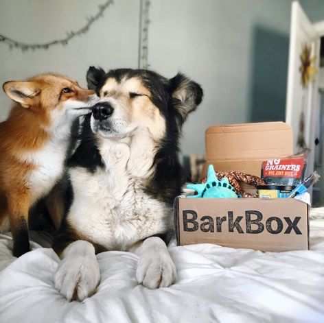 source:  BarkBox