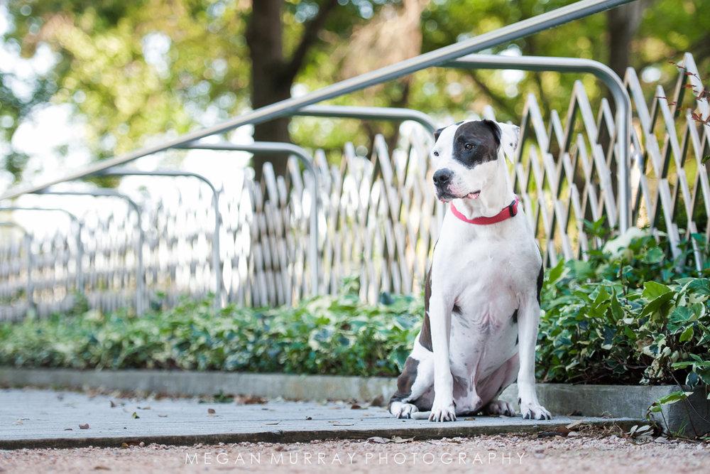 black and white dog houston texas photography