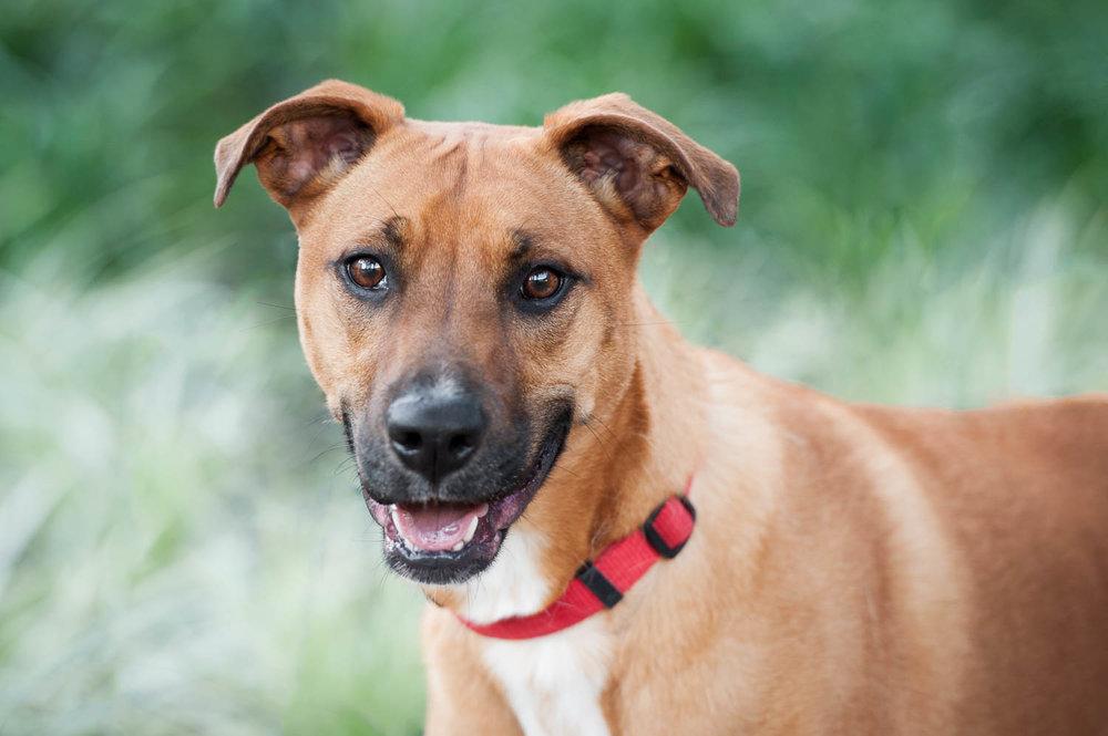 smiling dog in houston texas park