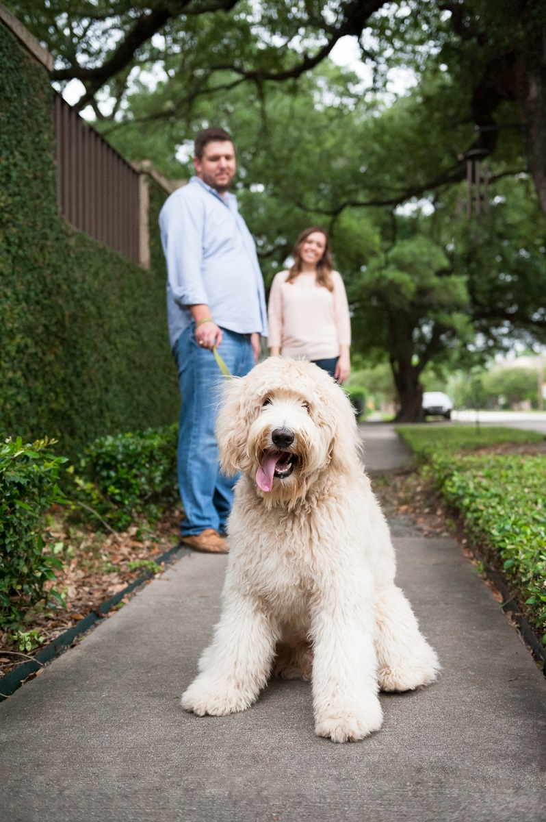goldendoodle in the heights with young couple