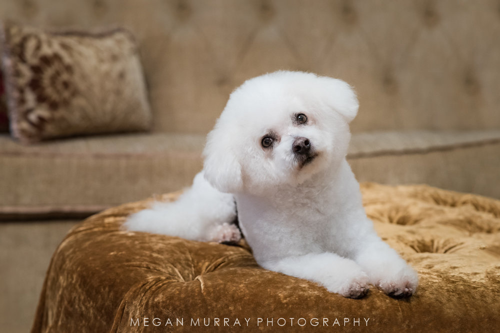 in home pet photography session houston texas