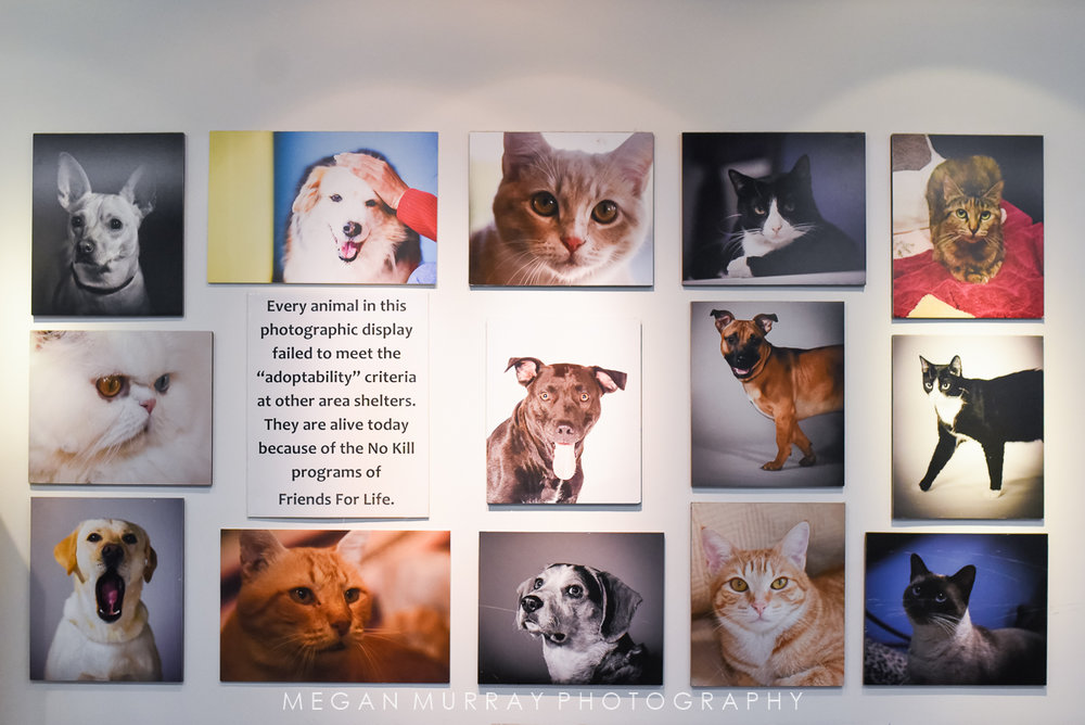 Gallery wall in the Friends For Life adoption center lobby