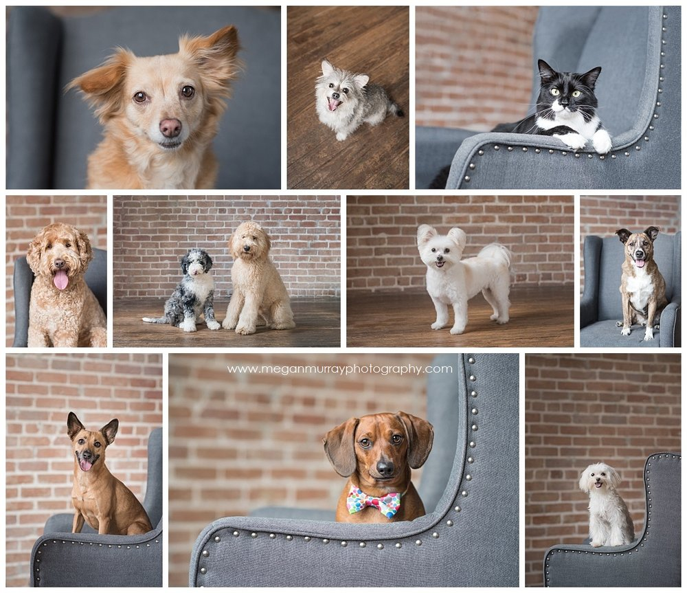 houston pet portrait fundraiser for friends for life animal shelter