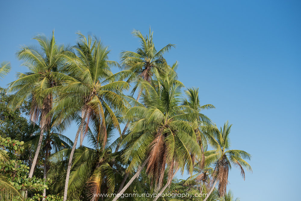 palm trees at Manuel Antonio beach