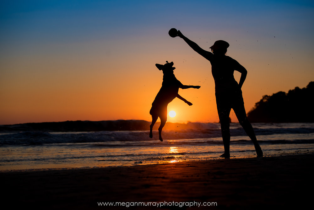 silhouette of dog with owner beach sunset