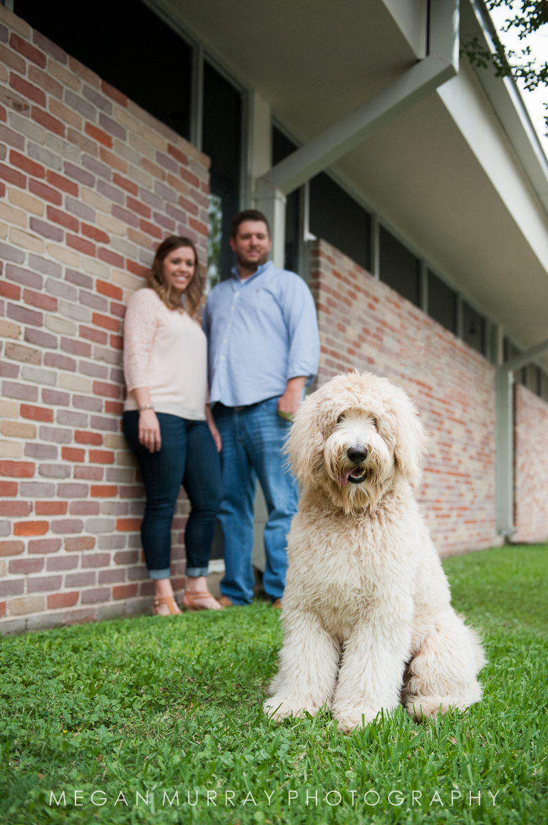 houston heights goldendoodle