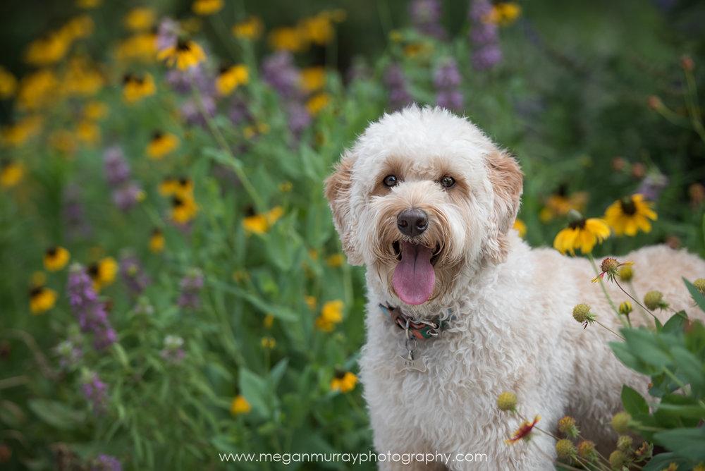 houston dog in mcgovern centennial gardens