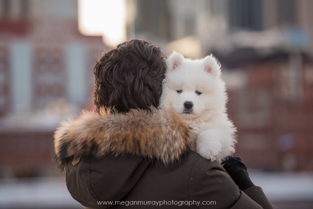 samoyed puppy with owner in warm coat