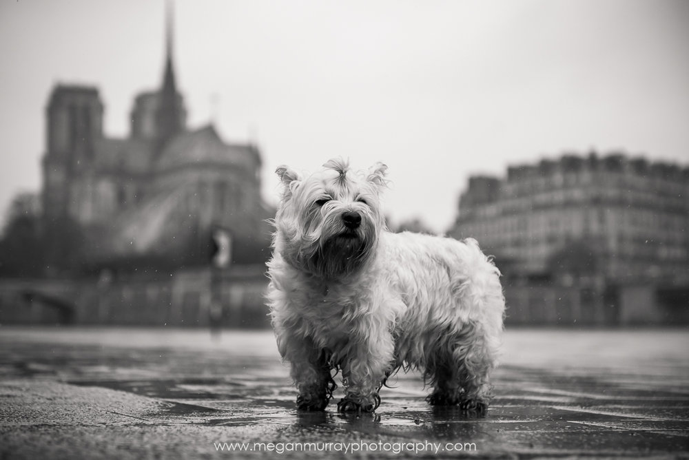 Rainy walk near the Notre Dame cathedral