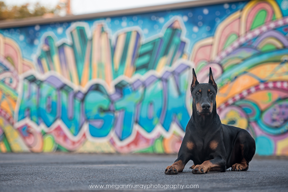 doberman with houston graffiti wall