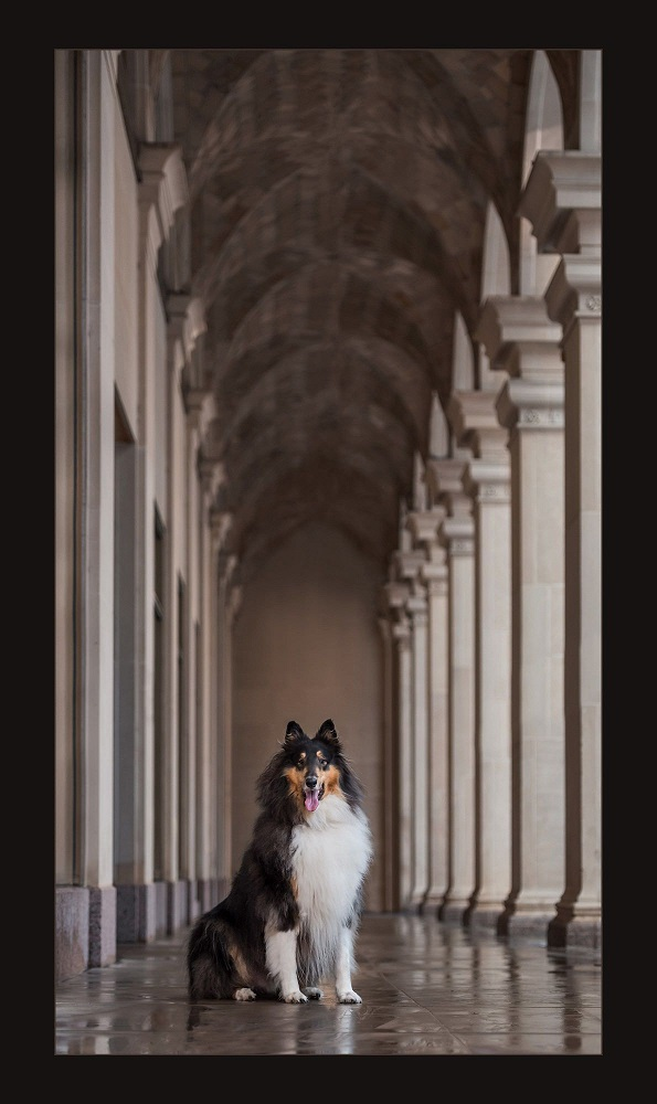 Collie and Columns
