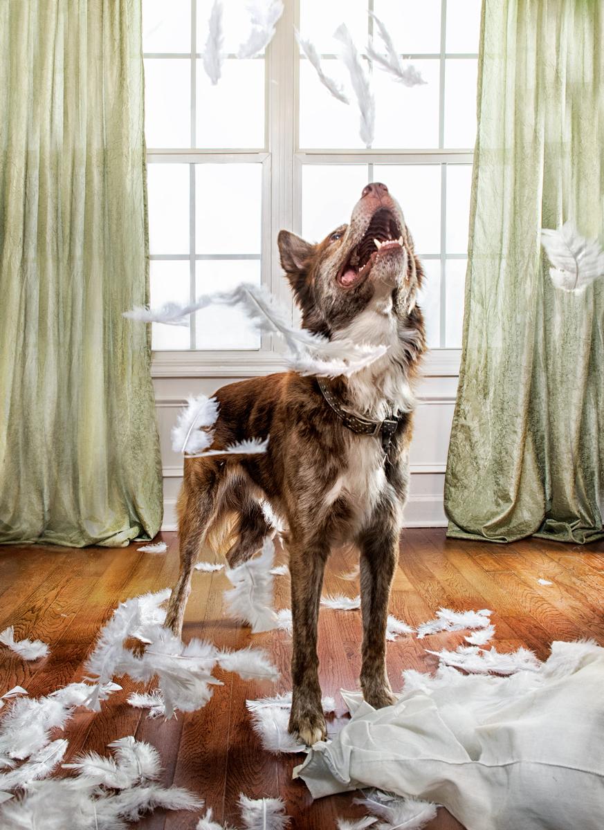 dogs-7226.jpg