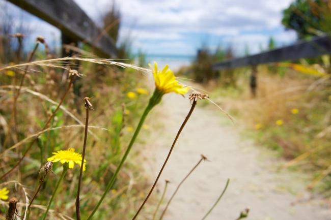 Beach_Access_02_FB.jpg