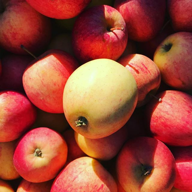 Vi fortsätter musta tills era äpplen tar slut! Inlämning vardagar 07-18!