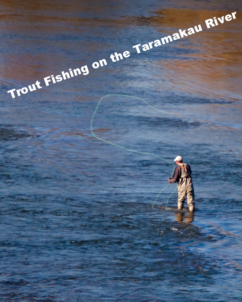 Trout Fishing on the Taramakau River (near Kumara)