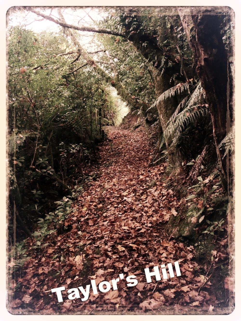 Taylor's Hill Walk, Kumara