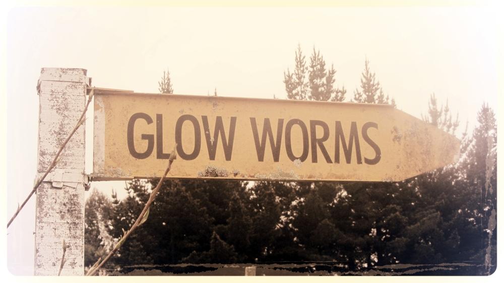 Glow Worms, Kumara