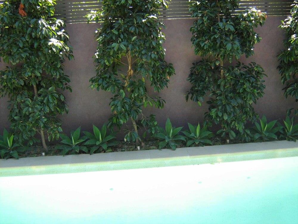 Isaac planting behind pool.jpg