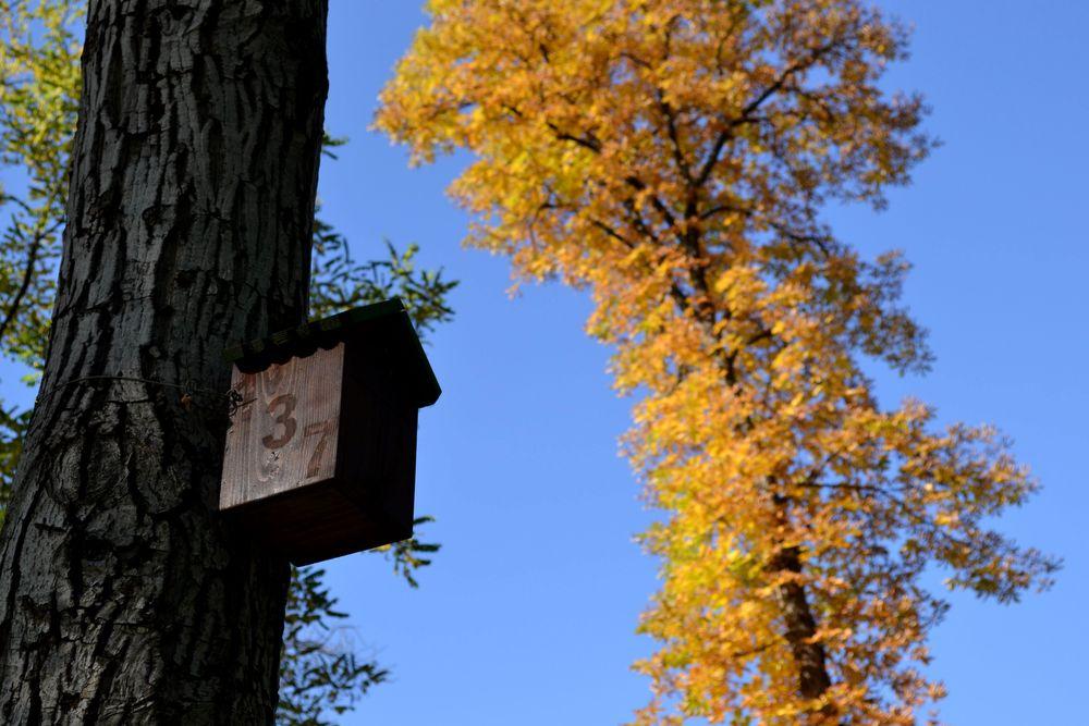 bird-house-tree