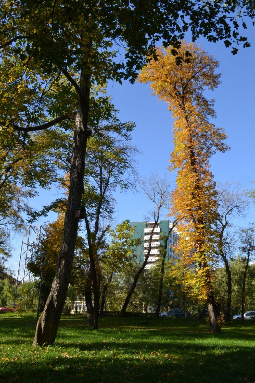 trees-park-autumn