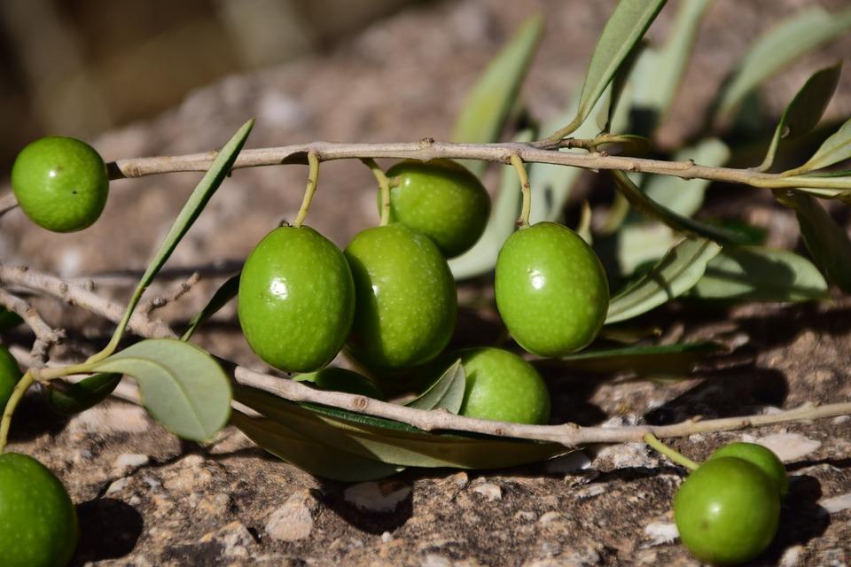 olives vertes.jpg